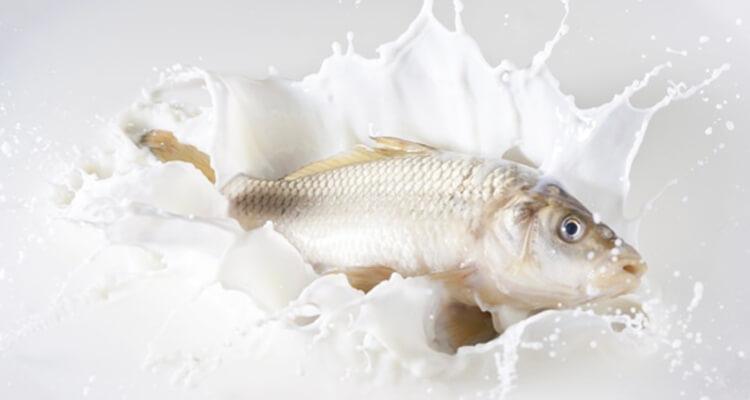 healtfit balıkurunleri - Hangi Besinler Birlikte Tüketilmemeli